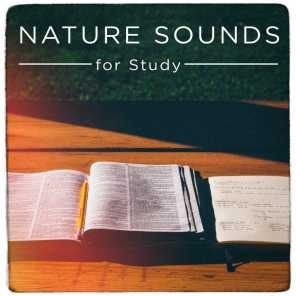 Nature Sounds for Study