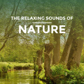 Nature Sounds XLE Library - Rain Sound: Forest of Rain | Play for