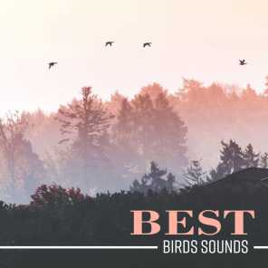 Bird Song Group - Empty Forest | Play for free on Anghami