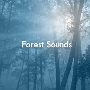Mother Earth Sounds - Far Away Forest | Play for free on Anghami
