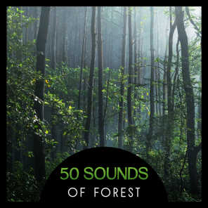 Nature Music Sanctuary - Violin & Forest Sounds | Play for free on