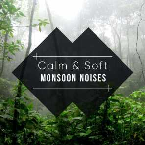 Rain Sounds, Relaxing Music Therapy, The Rain Library - Soft Rain