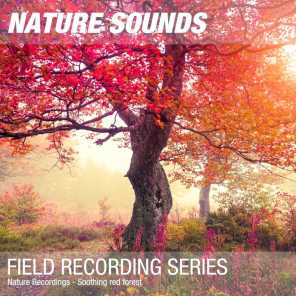 Nature Sounds & Nature Noise - Nature Sounds for Sleep, Relaxation