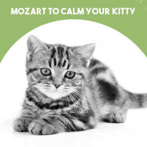 Mozart to calm your Kitty
